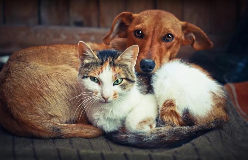 Município abre edital para castração de cães e gatos